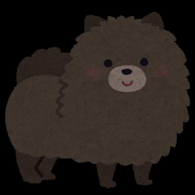 dog_pomeranian_black.png