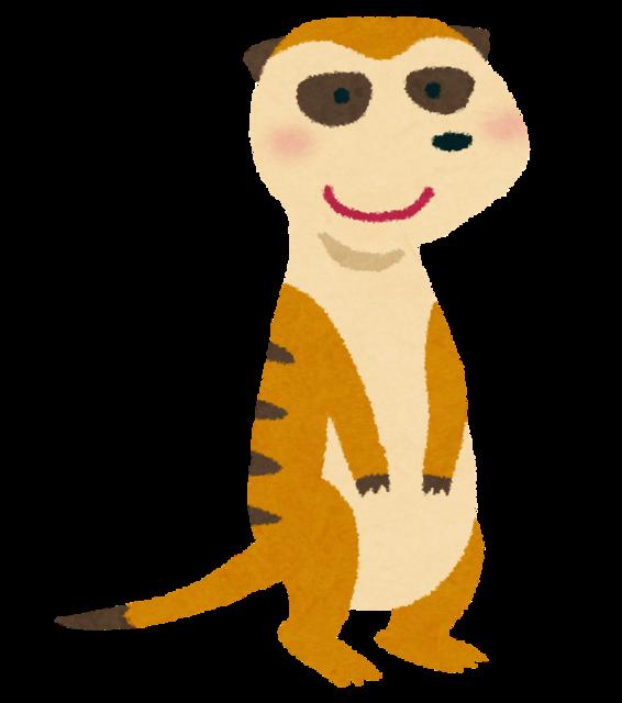animal_meerkat.png