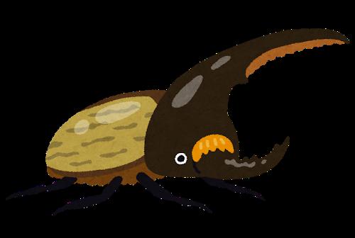 bug_kabutomushi_hercules.png