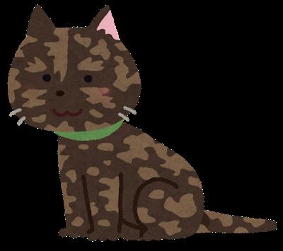 cat_sabineko.png