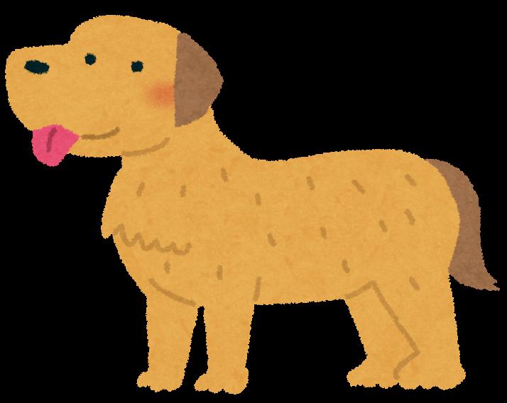 【元気画像】数ヶ月ドッグランを自粛した柴犬の現在wwwwwwwwww