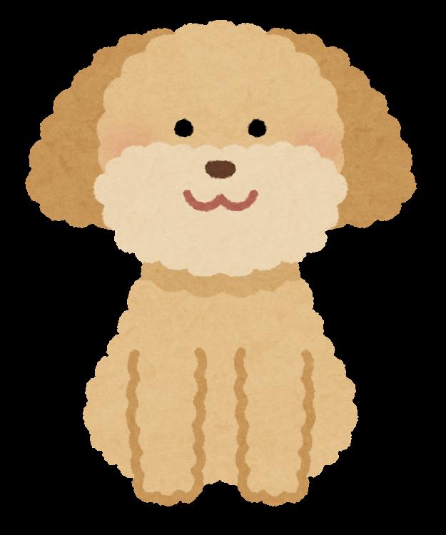 dog_toypoodle_cream.png